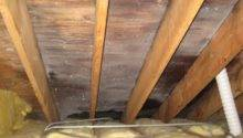 Attic Black Mold Why Growing Your