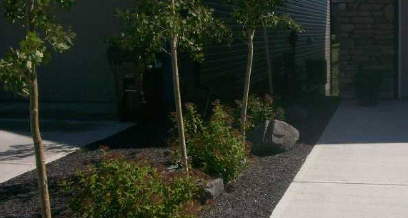 Driveway Landscaping Photos