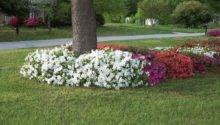 Landscaping Around Trees Flower Bed Landscape Designs