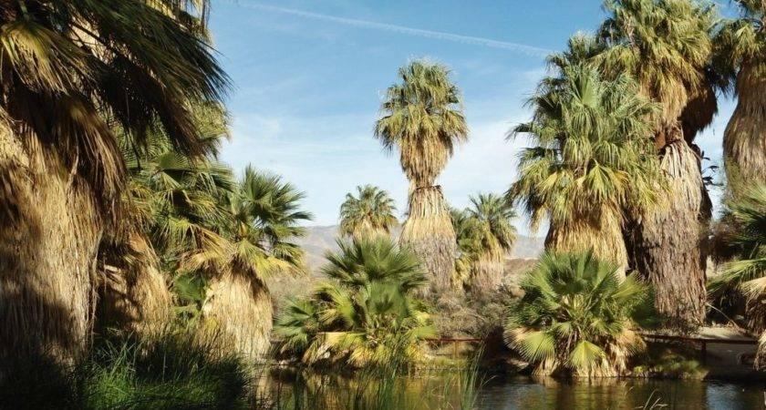Palm Springs Joshua Tree National Park