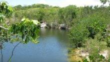 Panoramio Key Largo Hammock State Park