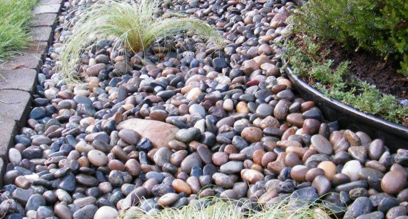 Rocks Curb Side Edition Dandelion Wrangler