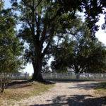 Starlite Mobile Home Park Mississippi Tripcarta