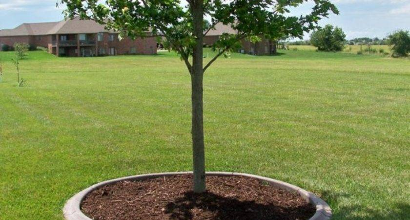 Tree Landscaping Ideas Newsonair